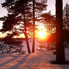 """фото """"Вечернее солнце"""""""