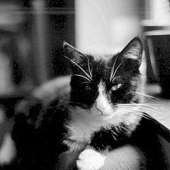 "album ""My cats"""