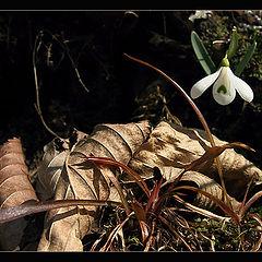 "фото ""Весна пробилась..."""