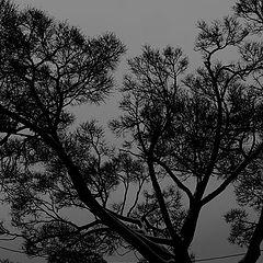 """фото """"a winter tree"""""""