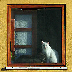 """фото """"Cats in the window"""""""