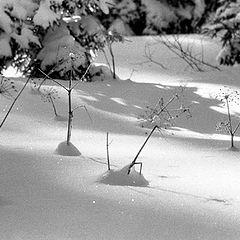 "фото ""Winter garden"""