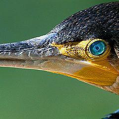 "photo ""Predatory bird"""