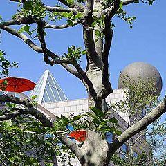 """photo """"Barcelona Vila Olimpica"""""""
