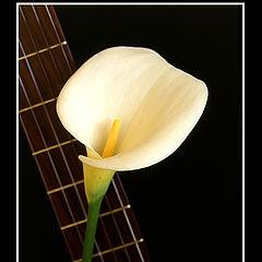 """фото """"Love Songs..."""""""