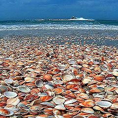 """фото """"Coast of the Sea"""""""