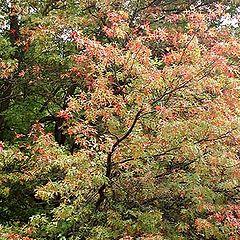 """фото """"* Autumn colors*"""""""