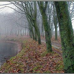"фото ""У озера двое - туман и я"""