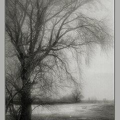 """фото """"Дерево в поле"""""""