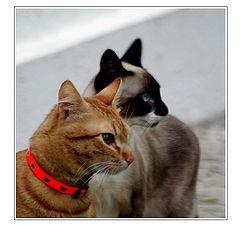 "фото ""Hey! Pussy-Cat, look at us!!!"""
