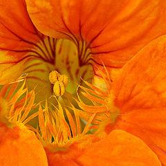 """фото """"Orange Spring"""""""