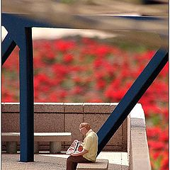 """photo """"A little life. The reader"""""""