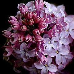 "фото ""Bloom in The Dark 8"""