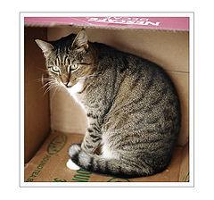 """photo """"Koshkin Dom / Cat`s House"""""""