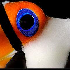 "photo ""Big Blue Eye"""