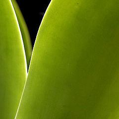 """фото """"Cactus"""""""
