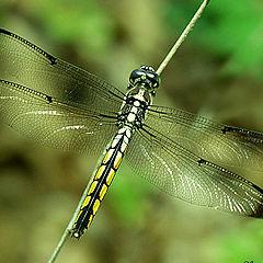 """фото """"Dragonfly"""""""
