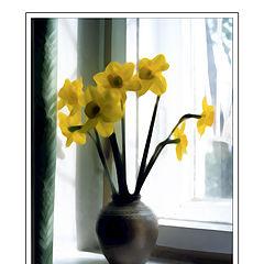 "photo ""Yellow Bouguet"""