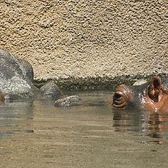 "photo ""Zoo  Love"""