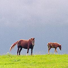 """фото """"Про лошадей"""""""