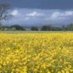 "фото ""*Yellow*"""