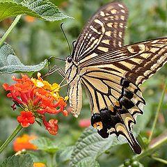 """фото """"Butterfly & Flowers"""""""