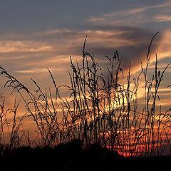 "фото ""Sunset Silhouettes"""