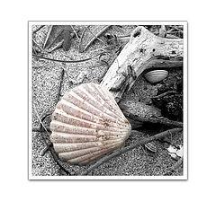 "photo ""Beach Collisions"""