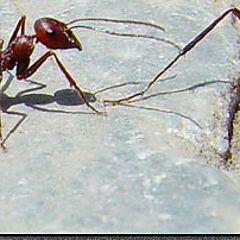 """фото """"Ants"""""""