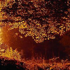 """photo """"Autumn memoirs"""""""