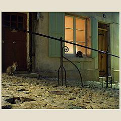 """фото """"Ночные кошки.Двуличность"""""""