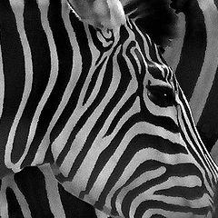 "photo ""life in black-n-white"""
