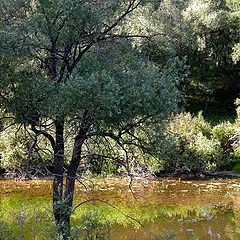 """фото """"желтая река"""""""