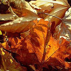 """фото """"Листья осени."""""""