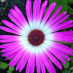 "фото ""Flower- pink"""