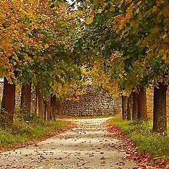 "photo ""Early Autumn"""