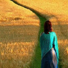 "photo ""The path through the field"""