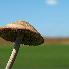 """фото """"The mushroom and the teeny cloud"""""""