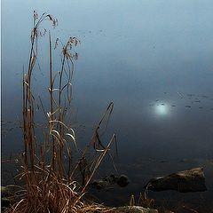 """фото """"Луна и пруд"""""""