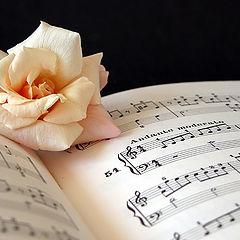 """фото """"love song"""""""