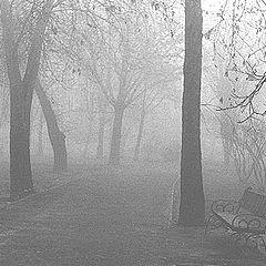 """photo """"Mist"""""""