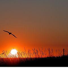 """фото """"Sunset..."""""""