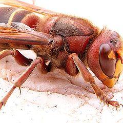 "photo ""Beee"""