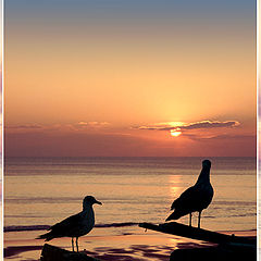 "photo ""Two sea gulls"""