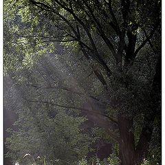 """фото """"Солнечный ливень"""""""