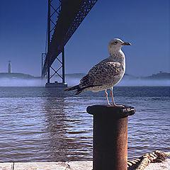 "photo ""Sea gull under the bridge"""