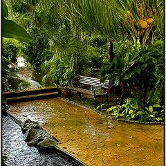 "фото ""Мокрая скамейка под тропическим дождем"""