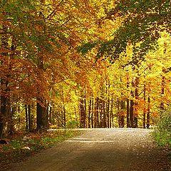 "photo ""Wood Walk"""