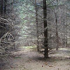 """фото """"А лес такой загадочный..."""""""