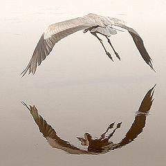 "фото ""Flying away"""
